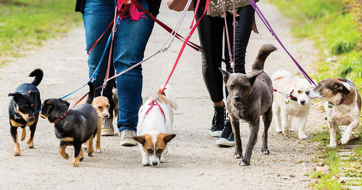 Highest Paid Part-Time Jobs for College Students dog walker pet sitter