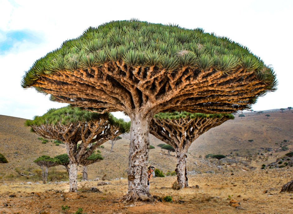 See The Most Untouched Places In The World socotra