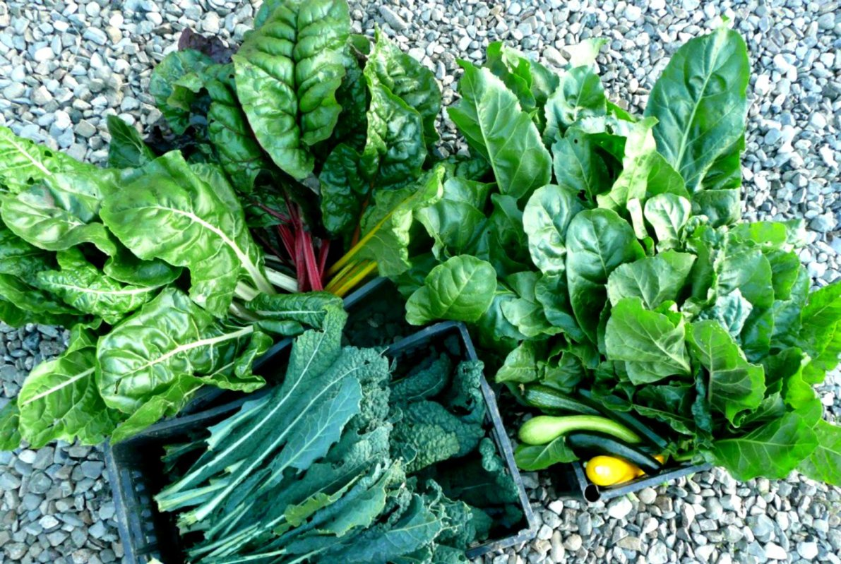 Top Cancer-Fighting Foods You Have To Know leafy greens